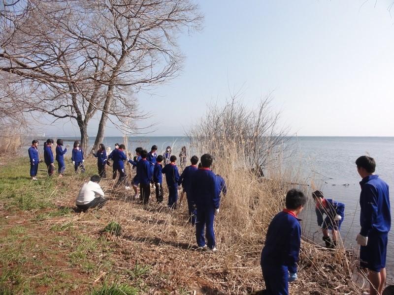 びわ中学校のヨシ刈りと環境学習